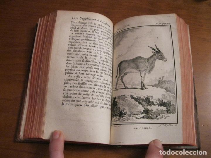 Libros antiguos: Suplemet a l histoire naturelle Tomo XI, 1782. Buffon. Posee grabados - Foto 8 - 153740322
