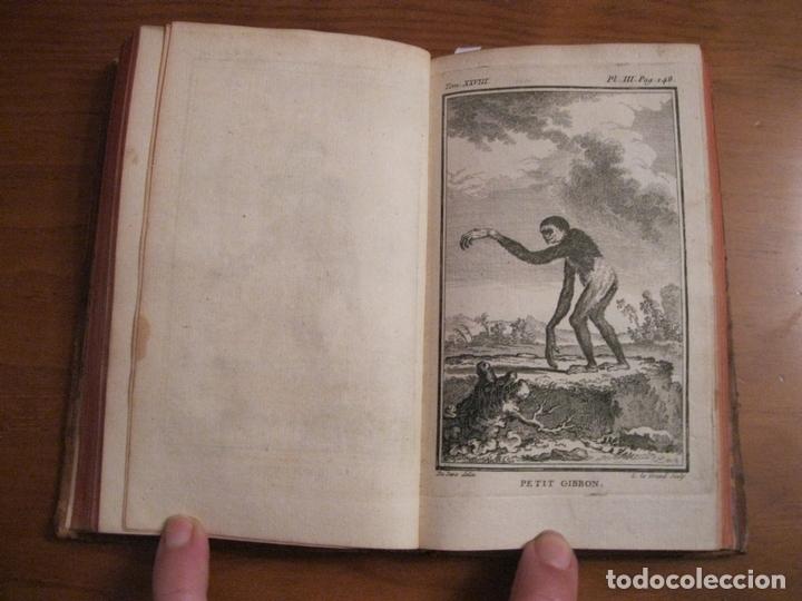 HISTOIRE NATURELLE, GÉNÉRALE ET PARTICULIÉRE... TOMO 28. 1768. BUFFON. POSEE 18 GRABADOS (Libros Antiguos, Raros y Curiosos - Ciencias, Manuales y Oficios - Biología y Botánica)
