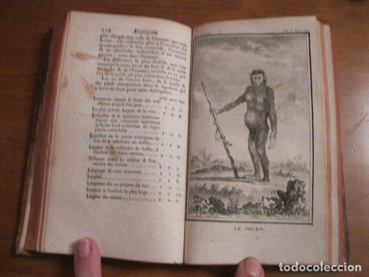 Libros antiguos: Histoire Naturelle, générale et particuliére... Tomo 28. 1768. Buffon. Posee 18 grabados - Foto 4 - 153746130