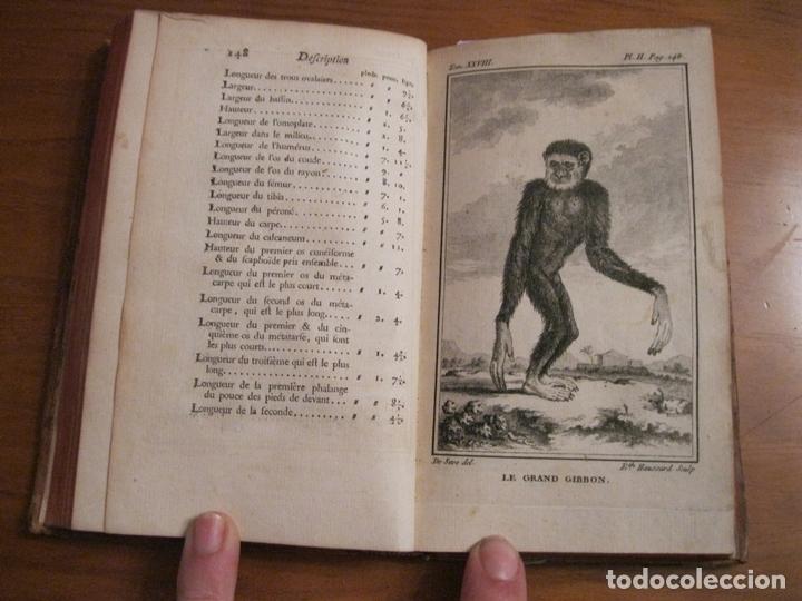 Libros antiguos: Histoire Naturelle, générale et particuliére... Tomo 28. 1768. Buffon. Posee 18 grabados - Foto 5 - 153746130