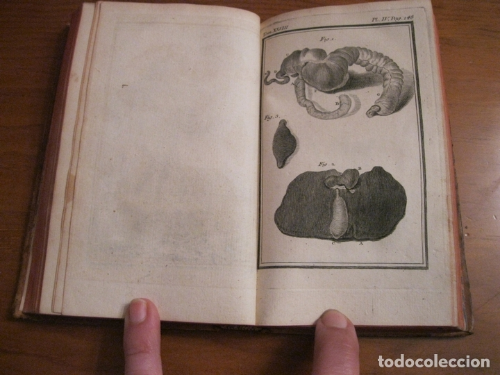 Libros antiguos: Histoire Naturelle, générale et particuliére... Tomo 28. 1768. Buffon. Posee 18 grabados - Foto 6 - 153746130