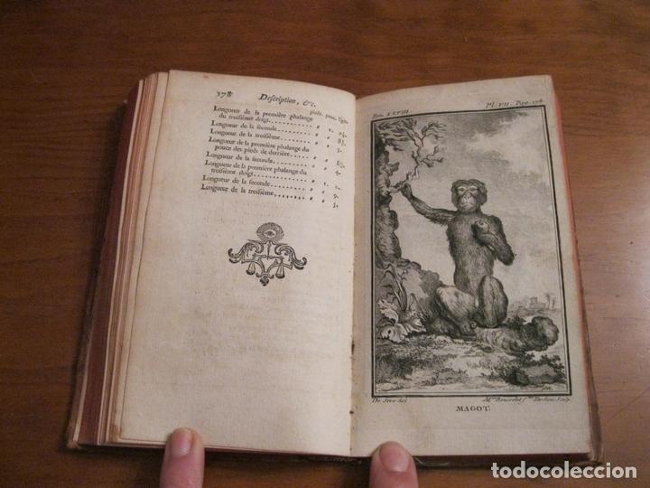 Libros antiguos: Histoire Naturelle, générale et particuliére... Tomo 28. 1768. Buffon. Posee 18 grabados - Foto 9 - 153746130