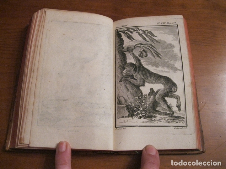 Libros antiguos: Histoire Naturelle, générale et particuliére... Tomo 28. 1768. Buffon. Posee 18 grabados - Foto 10 - 153746130