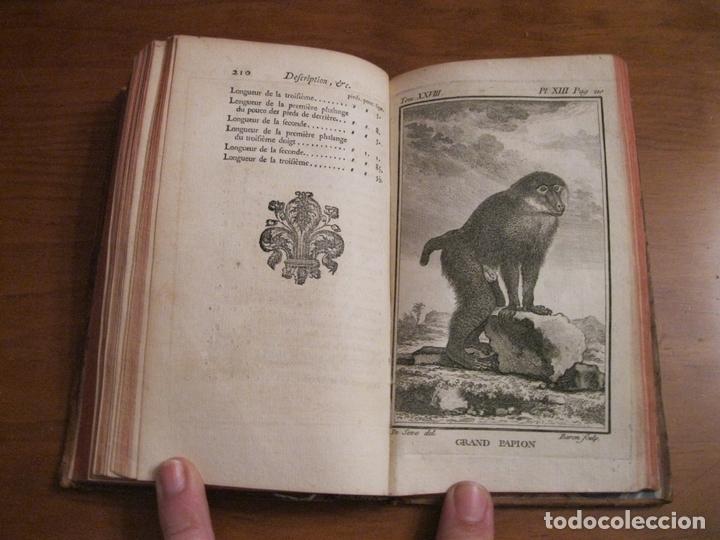Libros antiguos: Histoire Naturelle, générale et particuliére... Tomo 28. 1768. Buffon. Posee 18 grabados - Foto 15 - 153746130