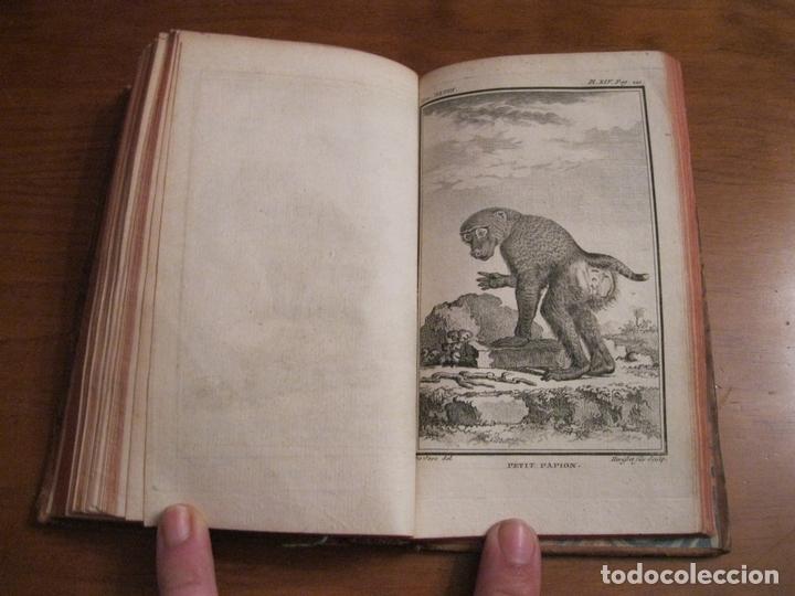 Libros antiguos: Histoire Naturelle, générale et particuliére... Tomo 28. 1768. Buffon. Posee 18 grabados - Foto 16 - 153746130