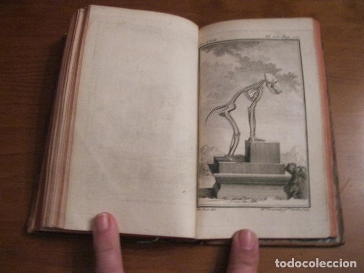 Libros antiguos: Histoire Naturelle, générale et particuliére... Tomo 28. 1768. Buffon. Posee 18 grabados - Foto 17 - 153746130