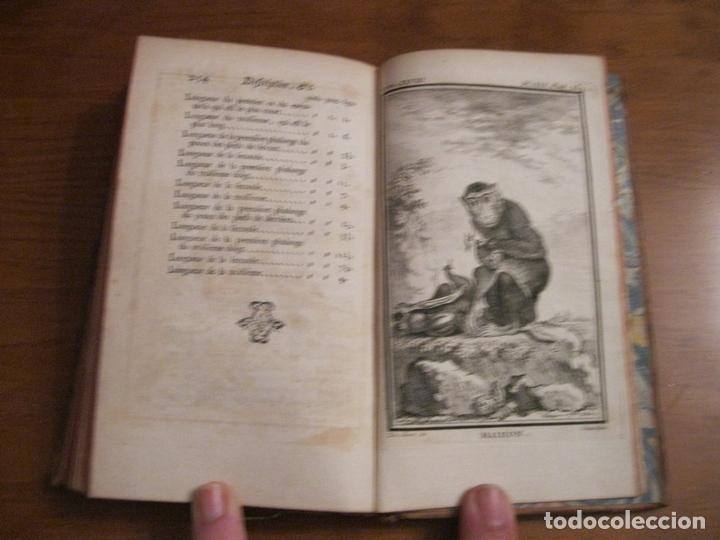 Libros antiguos: Histoire Naturelle, générale et particuliére... Tomo 28. 1768. Buffon. Posee 18 grabados - Foto 18 - 153746130