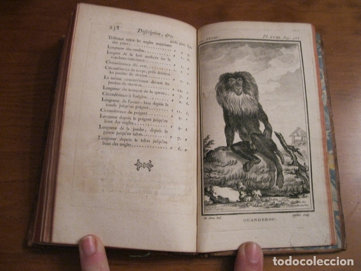 Libros antiguos: Histoire Naturelle, générale et particuliére... Tomo 28. 1768. Buffon. Posee 18 grabados - Foto 19 - 153746130