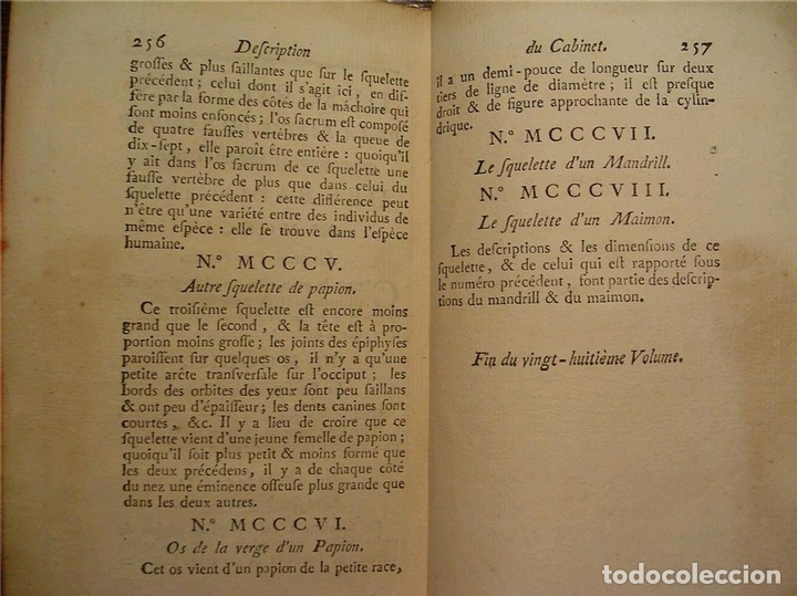Libros antiguos: Histoire Naturelle, générale et particuliére... Tomo 28. 1768. Buffon. Posee 18 grabados - Foto 31 - 153746130