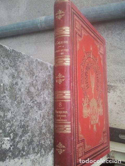 Libros antiguos: LA CREACIÓN - HISTORIA NATURAL - JUAN VILANOVA - TOMO VIII - MINERALOGÍA, GEOLOGÍA Y PALEONTOLOGÍA - Foto 3 - 153848758