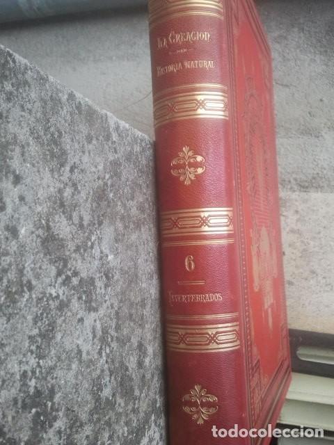 Libros antiguos: LA CREACIÓN - HISTORIA NATURAL - JUAN VILANOVA - TOMO VI - INVERTEBRADOS / ARTICULADOS - Foto 3 - 153855990