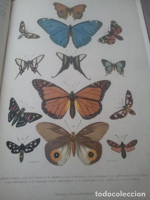 Libros antiguos: LA CREACIÓN - HISTORIA NATURAL - JUAN VILANOVA - TOMO VI - INVERTEBRADOS / ARTICULADOS - Foto 4 - 153855990