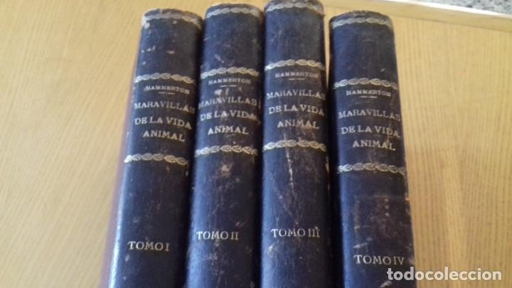 MARAVILLAS DE LA VIDA ANIMAL - HAMMERTON - JOAQUIN GIL 1º EDICION ABRIL 1930-COMPLETA 4 TOMOS (Libros Antiguos, Raros y Curiosos - Ciencias, Manuales y Oficios - Bilogía y Botánica)