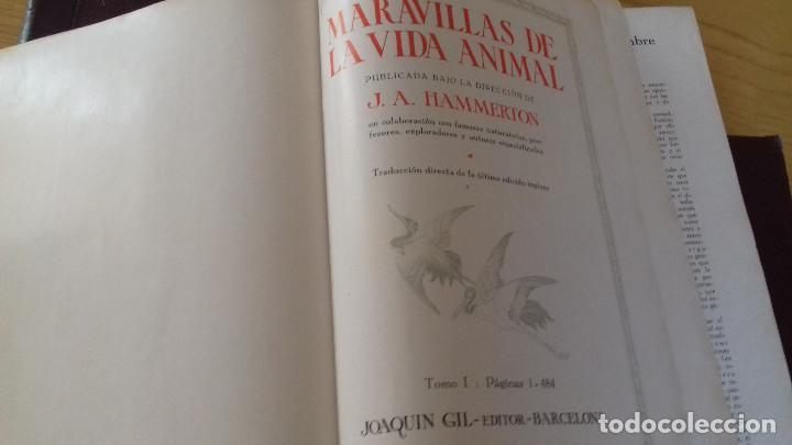 Libros antiguos: MARAVILLAS DE LA VIDA ANIMAL - HAMMERTON - JOAQUIN GIL 1º EDICION ABRIL 1930-COMPLETA 4 TOMOS - Foto 4 - 158894594