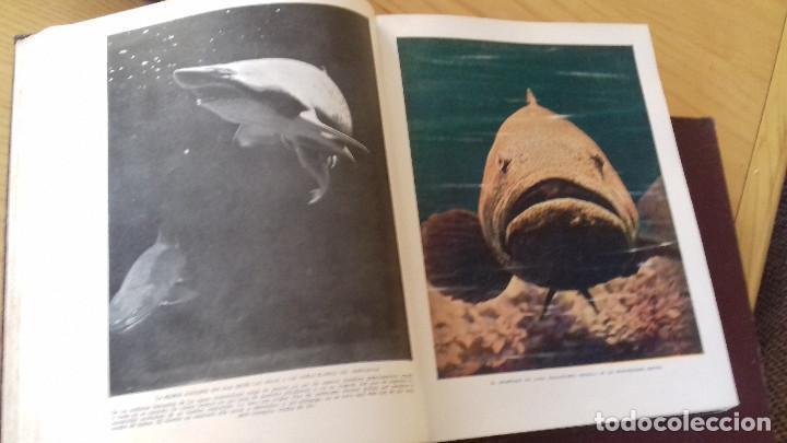 Libros antiguos: MARAVILLAS DE LA VIDA ANIMAL - HAMMERTON - JOAQUIN GIL 1º EDICION ABRIL 1930-COMPLETA 4 TOMOS - Foto 6 - 158894594