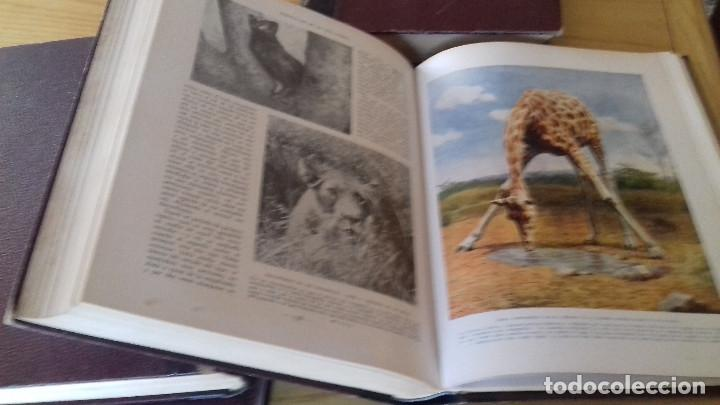Libros antiguos: MARAVILLAS DE LA VIDA ANIMAL - HAMMERTON - JOAQUIN GIL 1º EDICION ABRIL 1930-COMPLETA 4 TOMOS - Foto 10 - 158894594