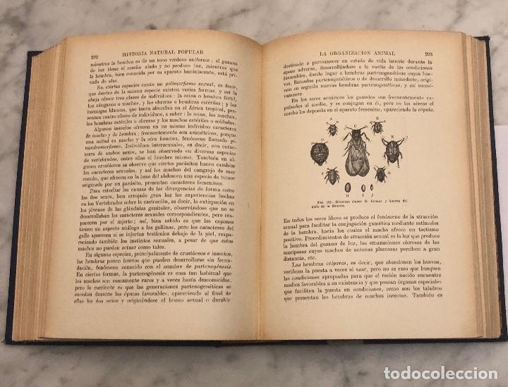 Libros antiguos: HISTORIA NATURAL(45€) - Foto 5 - 154376562