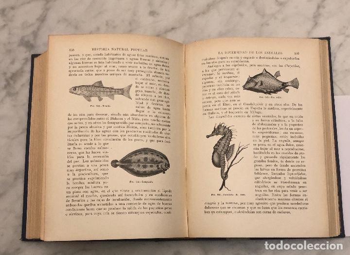 Libros antiguos: HISTORIA NATURAL(45€) - Foto 6 - 154376562