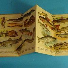 Libros antiguos: NUEVO ATLAS HISTORIA NATURAL.. CON 93 ILUSTRACIONES. VOLUMEN III. PECES. CASA EDITORIAL ARALUCE. Lote 154475290