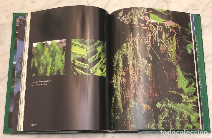 Libros antiguos: Un Arbol,muchas hojas(15€) - Foto 3 - 154476294