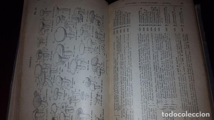 Libros antiguos: Nouvelle flore des Champignons - 1934 - Foto 7 - 154866962