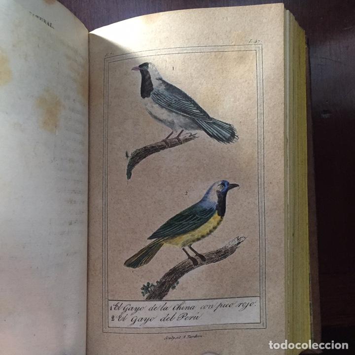 Libros antiguos: Colección Obras Completas de Buffon - Foto 17 - 151907094
