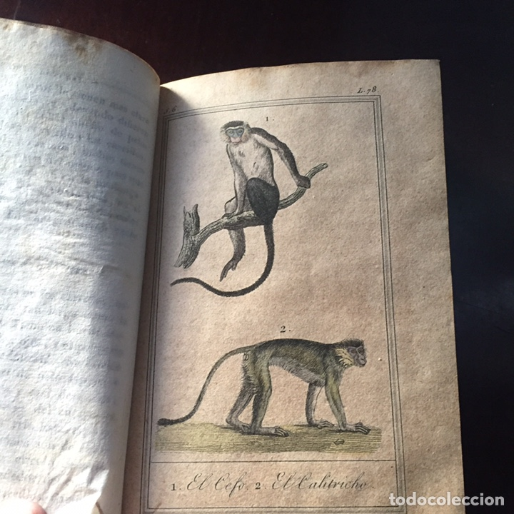 Libros antiguos: Colección Obras Completas de Buffon - Foto 22 - 151907094