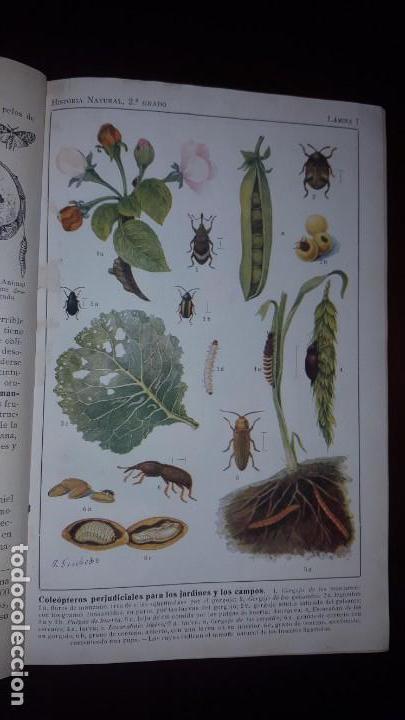 Libros antiguos: Nociones de Historia Natural - Segundo grado - Schmeil - 1926 - Foto 10 - 155528078