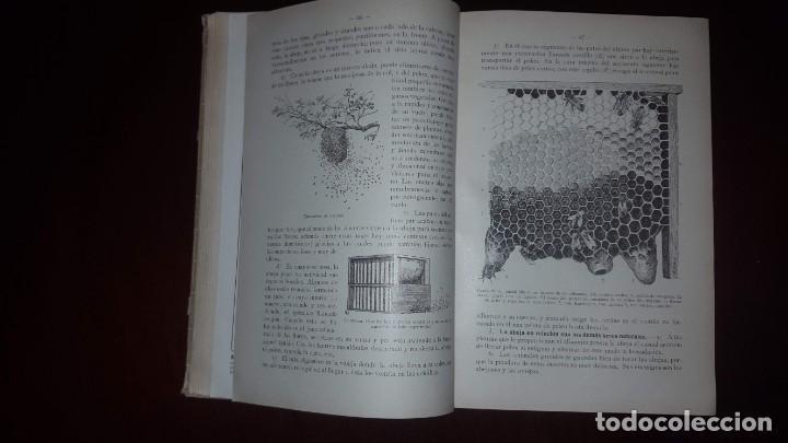 Libros antiguos: Nociones de Historia Natural - Segundo grado - Schmeil - 1926 - Foto 12 - 155528078