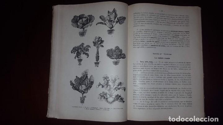 Libros antiguos: Nociones de Historia Natural - Segundo grado - Schmeil - 1926 - Foto 15 - 155528078
