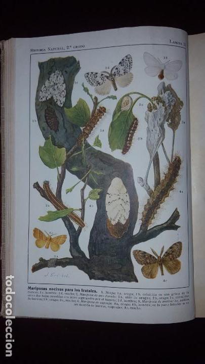 Libros antiguos: Nociones de Historia Natural - Segundo grado - Schmeil - 1926 - Foto 11 - 155528078
