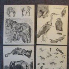 Libros antiguos: RARA CARPETA CON 70 DISEÑOS DE ANIMALES EN 14 PLANCHAS POR F.MAISSEN, JACQUES CARTIER,FRÉDÉRIC ROTIG. Lote 156825954