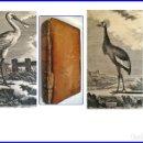 Libros antiguos: AÑO 1780: HISTORIA NATURAL DE LOS PÁJAROS. BUFFON. CON MULTITUD DE ILUSTRACIONES.. Lote 160725106