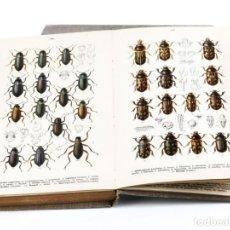 Libros antiguos: 1916 - ENTOMOLOGIA - COLEÓPTEROS - 170 LÁMINAS EN COLOR - 5 VOLÚMENES - REITTER - EN ALEMÁN. Lote 165043998
