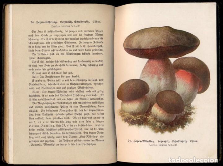 Libros antiguos: 1910 - Guia de Setas (Más de 300 especies cromolitografiadas) 3 Tomos - En alemán - Foto 2 - 166303670