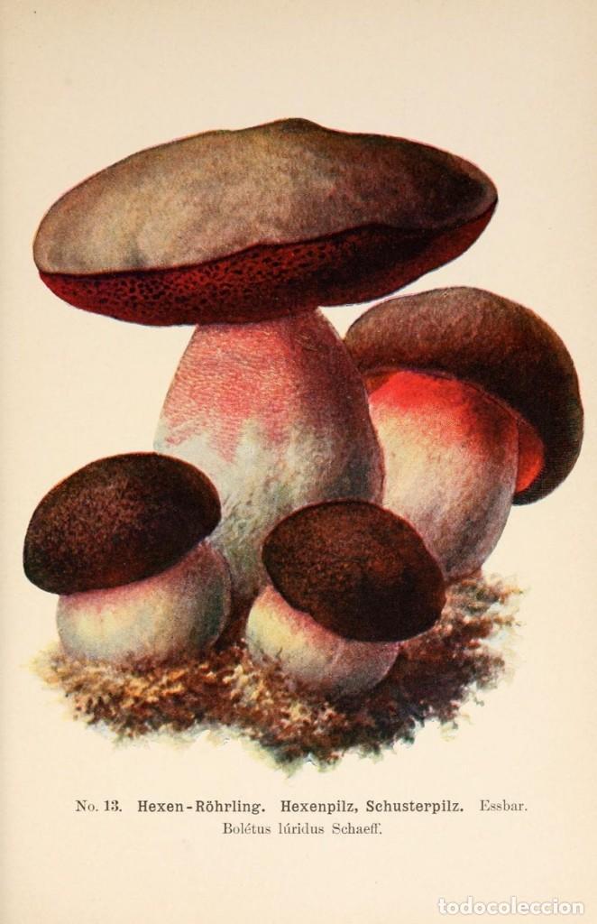 Libros antiguos: 1910 - Guia de Setas (Más de 300 especies cromolitografiadas) 3 Tomos - En alemán - Foto 5 - 166303670