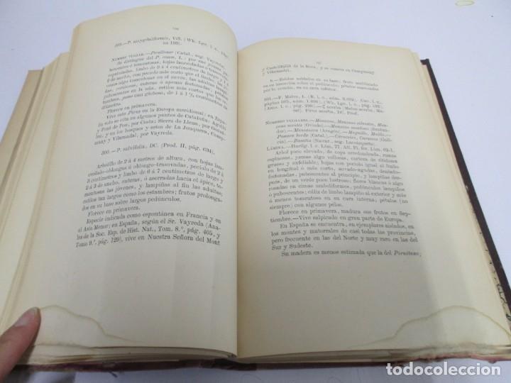 Libros antiguos: FLORA FORESTAL ESPAÑOLA DE LOS ARBOLES, ARBUSTOS Y MATAS. II PARTE. MAXIMO LAGUNA. 1890 - Foto 13 - 166526334
