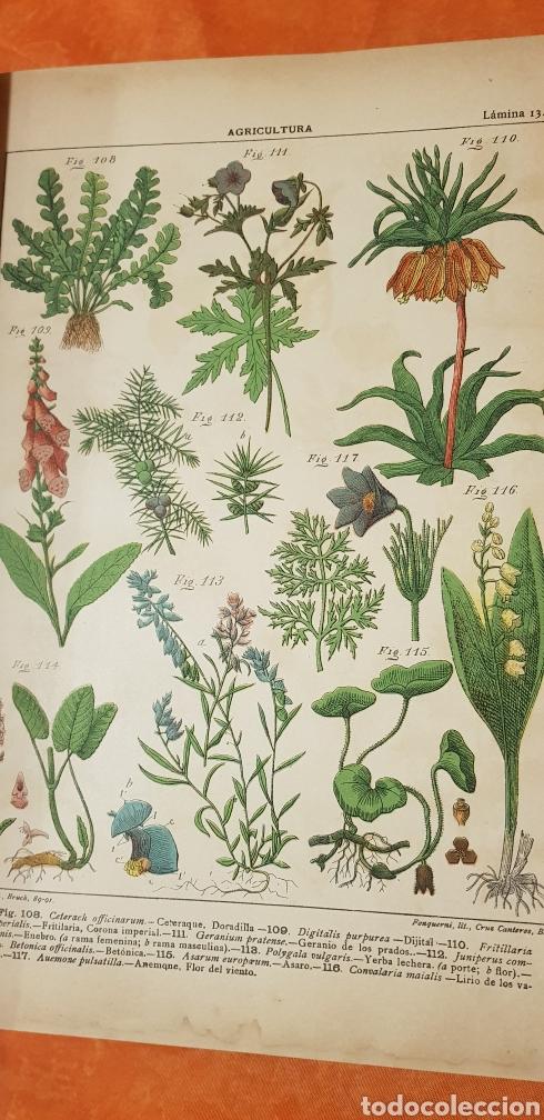 Libros antiguos: TRATADO DE AGRICULTURA Y ZOOTECNICA,5 TOMOS COMPLTA,1889- - Foto 6 - 168457249