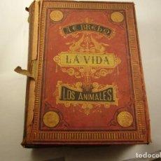 Libros antiguos: LA VIDA DE LOS ANIMALES . DR. BREHM, TOMO VI INVERTEBRADOS. 1883, FONT Y TORRENS, 814 PAG. Lote 168578064