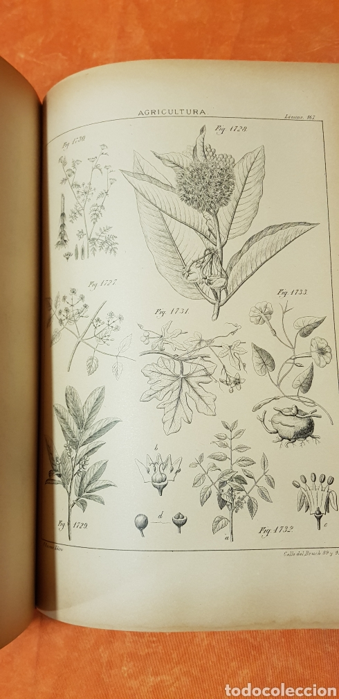 Libros antiguos: TRATADO DE AGRICULTURA Y ZOOTECNICA,5 TOMOS COMPLTA,1889- - Foto 24 - 168457249
