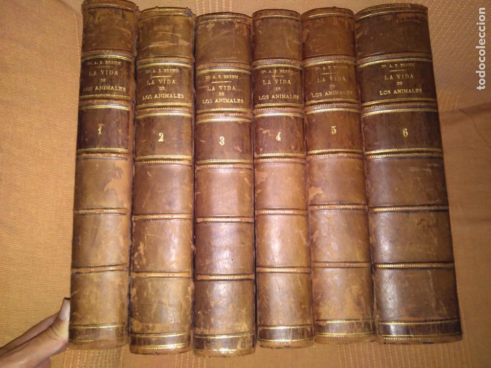 1882. LA VIDA DE LOS ANIMALES. OBRA COMPLETA. DR. BREHM. (Libros Antiguos, Raros y Curiosos - Ciencias, Manuales y Oficios - Bilogía y Botánica)