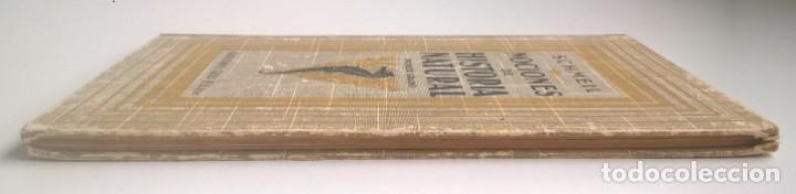 Libros antiguos: NOCIONES DE HISTORIA NATURAL - PRIMER GRADO (DR.OTTO SCHMEIL) - A.CABALLERO Y F.PARDILLO - AÑO 1926 - Foto 6 - 169757600