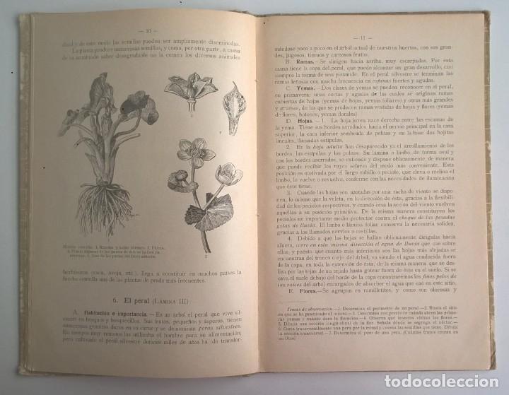 Libros antiguos: NOCIONES DE HISTORIA NATURAL - PRIMER GRADO (DR.OTTO SCHMEIL) - A.CABALLERO Y F.PARDILLO - AÑO 1926 - Foto 15 - 169757600
