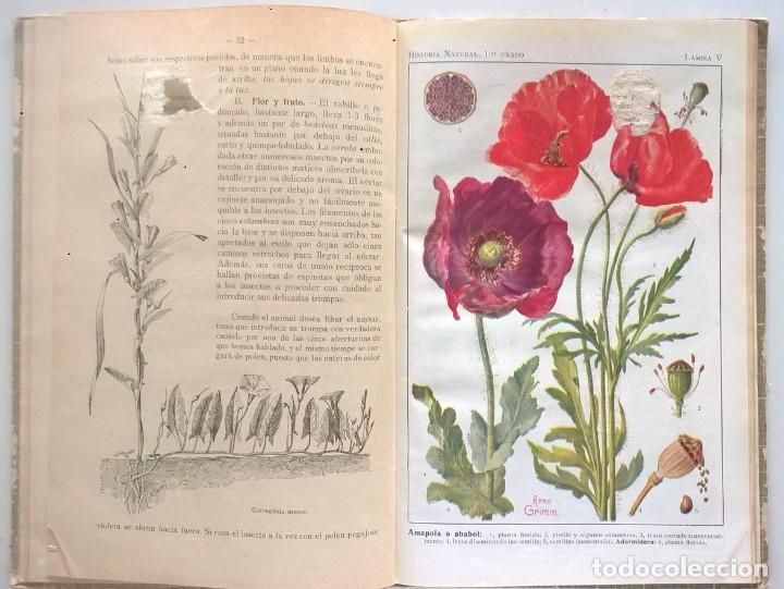 Libros antiguos: NOCIONES DE HISTORIA NATURAL - PRIMER GRADO (DR.OTTO SCHMEIL) - A.CABALLERO Y F.PARDILLO - AÑO 1926 - Foto 22 - 169757600