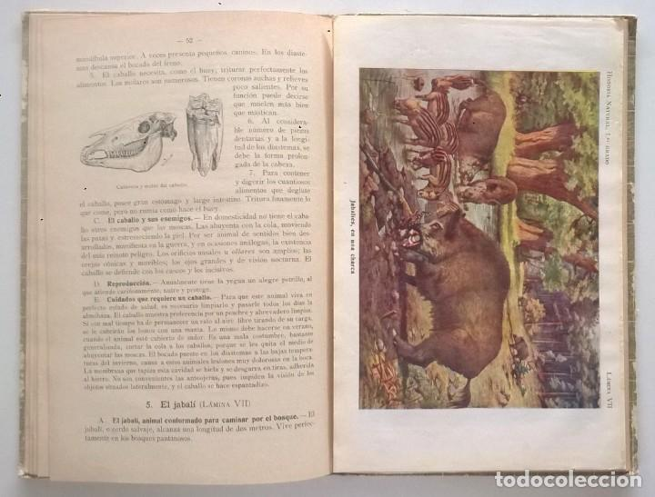 Libros antiguos: NOCIONES DE HISTORIA NATURAL - PRIMER GRADO (DR.OTTO SCHMEIL) - A.CABALLERO Y F.PARDILLO - AÑO 1926 - Foto 29 - 169757600