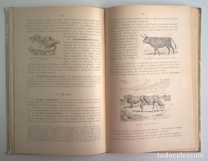 Libros antiguos: NOCIONES DE HISTORIA NATURAL - PRIMER GRADO (DR.OTTO SCHMEIL) - A.CABALLERO Y F.PARDILLO - AÑO 1926 - Foto 27 - 169757600