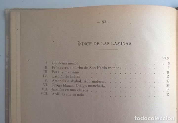 Libros antiguos: NOCIONES DE HISTORIA NATURAL - PRIMER GRADO (DR.OTTO SCHMEIL) - A.CABALLERO Y F.PARDILLO - AÑO 1926 - Foto 40 - 169757600