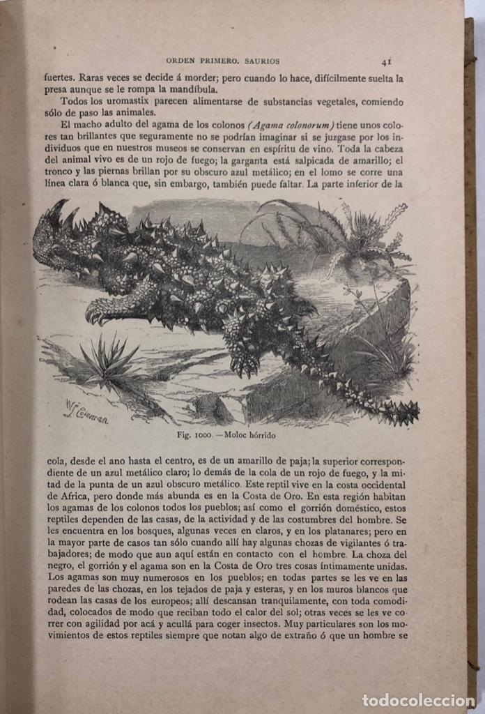 Libros antiguos: ZOOLOGIA. HISTORIA NATURAL. DOCTOR C. CLAUS. TOMO SEXTO. BARCELONA, 1892. PAGINAS: 334 - Foto 3 - 172750012
