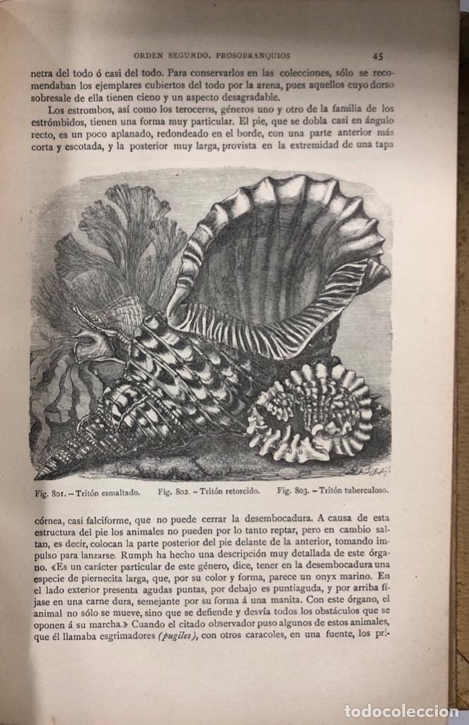 Libros antiguos: ZOOLOGIA. HISTORIA NATURAL. DOCTOR C. CLAUS. TOMO QUINTO. BARCELONA, 1891. PAGINAS: 350 - Foto 3 - 172750587