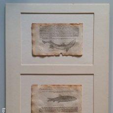Libros antiguos: PIERRE BELON: 2 HOJAS DEL DE AQUATILIBUS, DE 1553, CON DOS XILOGRAFÍAS, UNA JOYA DE LA BIOLOGIA. Lote 175614473